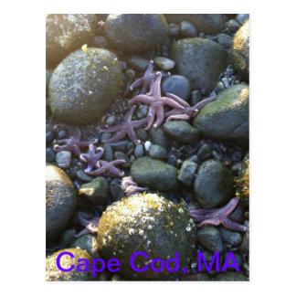 Cape Cod MA postcard
