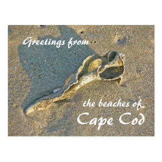 Cape Cod Massachusetts - Shell & Surf Postcard