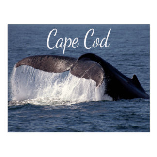 Cape Cod, Provincetown Massachusetts  Postcard