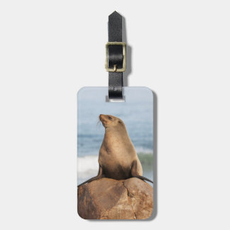Cape Fur Seal resting on a rock Luggage Tag
