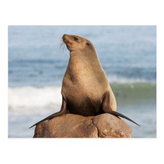 Cape Fur Seal resting on a rock Postcard