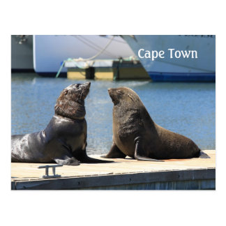 Cape Fur Seals, Waterfront, South Africa Postcard