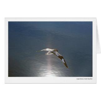 Cape Petrel, Neko Harbor Card