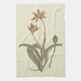 Cape Tulip Botanical Illustration Hand Towel