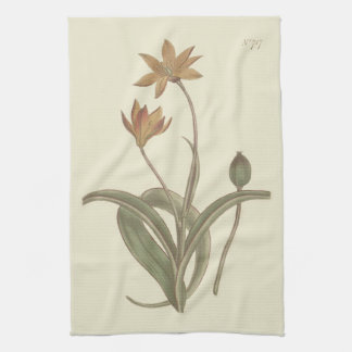 Cape Tulip Botanical Illustration Kitchen Towel