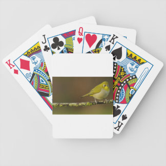Cape White-Eye Bird Perched Bicycle Playing Cards