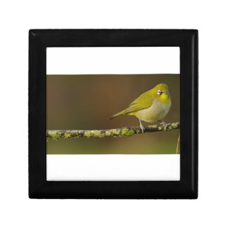 Cape White-Eye Bird Perched Gift Box
