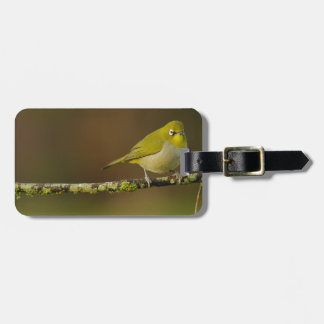 Cape White-Eye Bird Perched Luggage Tag