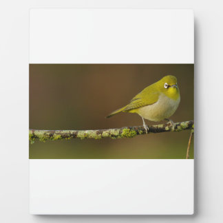 Cape White-Eye Bird Perched Plaque