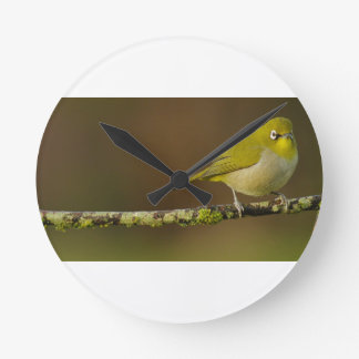 Cape White-Eye Bird Perched Round Clock