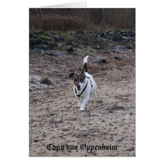 Capo von Oppenheim Jack Russell Terrier, Dog Card