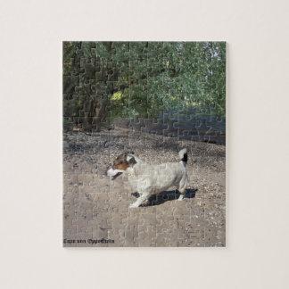 Capo von Oppenheim Jack Russell Terrier, Dog Jigsaw Puzzle