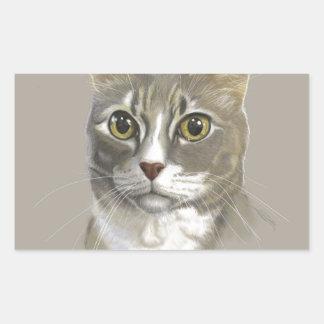 Captain domestic short hair cat