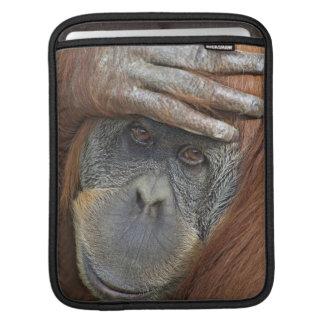 Captive female Sumatran Orangutan iPad Sleeve