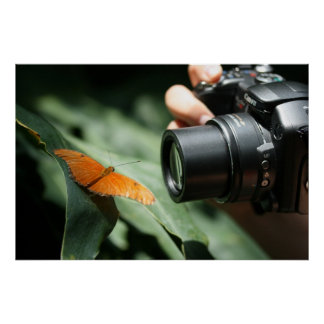 Capture a Butterfly Poster