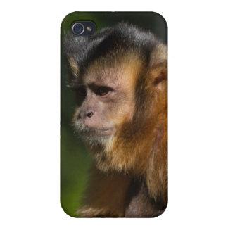 Capuchin Monkey iPhone 4/4S Covers
