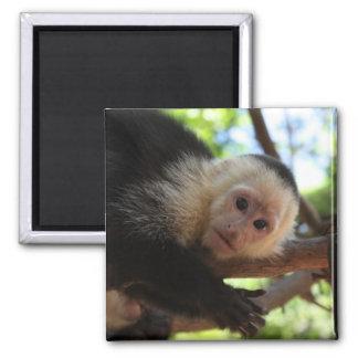 Capuchin Monkey Magnet
