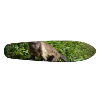 Capuchin Monkey Mugging for the Camera Skateboard Deck
