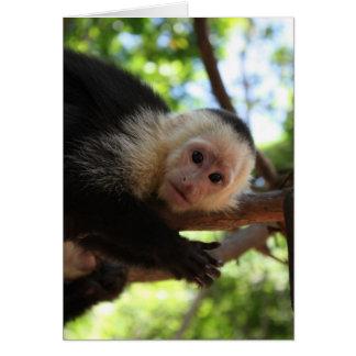 Capuchin Monkey Notecard
