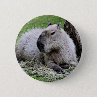 capybara, 2 inch round button