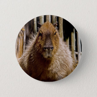 Capybara Staring 2 Inch Round Button