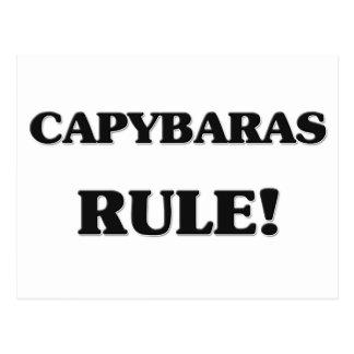 Capybaras Rule Postcard