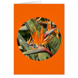 "Card, ""Bird of Paradise Blossoms in Circle"" Card"