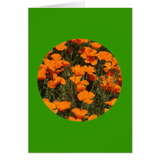 "Card, ""California Poppies in Circle"" # 4 Card"