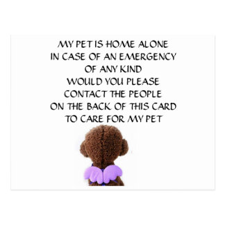 "CARD FOR ""YOUR PET"" IN CASE YOU HAVE AN EMERGENCY"