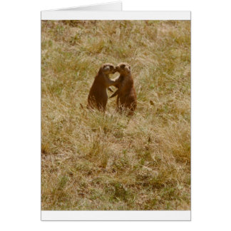 Card has cute photo of 2 prairie dogs 'chatting'