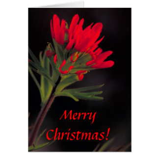Card / Indian Paintbrush / Christmas