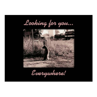 Card - Looking for you Postcard