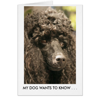 Card, Poodle, MY DOG WANTS TO KNOW . . . Card