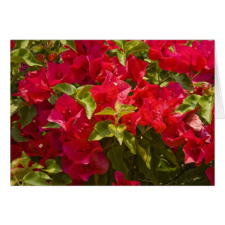"Card, ""Red Bougainvillia # 236"" Card"