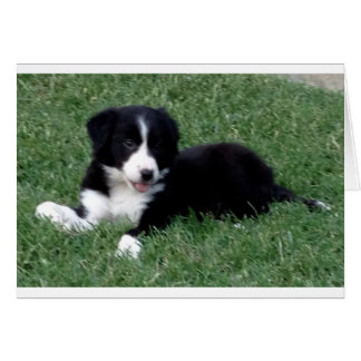 card vertical border collie puppy