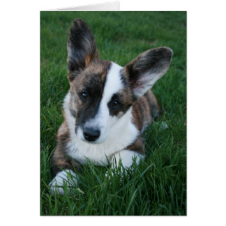 Cardigan Welsh Corgi Blank Card