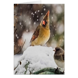 Cardinal And Sparrow In The Snow Card