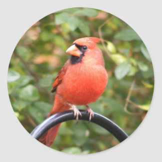 Cardinal Beauty Classic Round Sticker