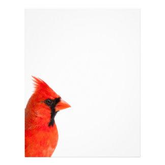 Cardinal Bird Letterhead