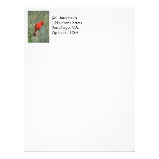 Cardinal Bird Photo Letterhead