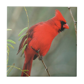 Cardinal Bird Photo Tile