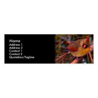 Cardinal Birds Business Card Templates
