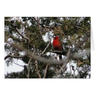 Cardinal & Cedar Card
