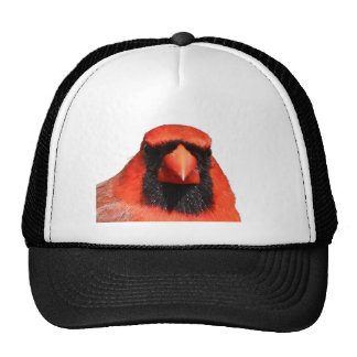Cardinal du nord casquette