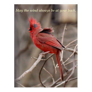 Cardinal Encouragment Postcard