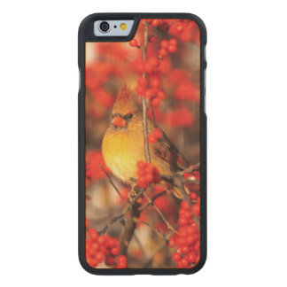 Cardinal female and red berries, IL Carved® Maple iPhone 6 Slim Case
