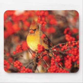 Cardinal female and red berries, IL Mouse Pad