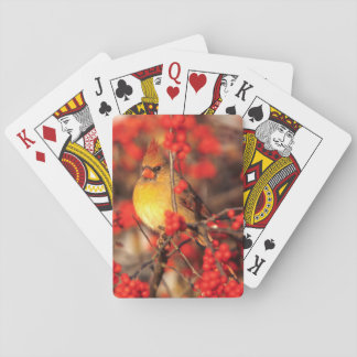 Cardinal female and red berries, IL Playing Cards