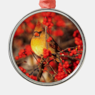 Cardinal female and red berries, IL Silver-Colored Round Ornament