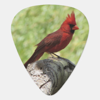 Cardinal Guitar Pick